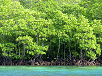 In shallower  areas there are Mangroves.....