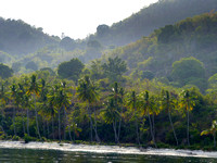 The island is ringed  by Coconut palms...