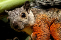 The rather endearing Variable Squirrel